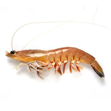 Spencer Gulf King Prawn